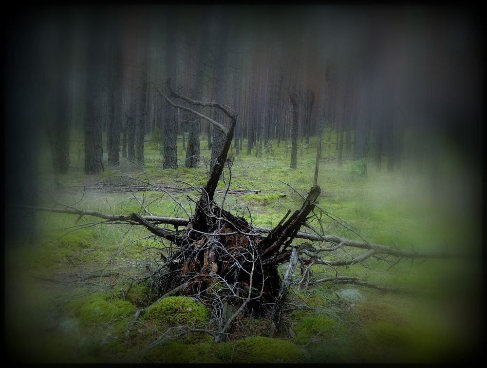 Photo in Random #forest #roots