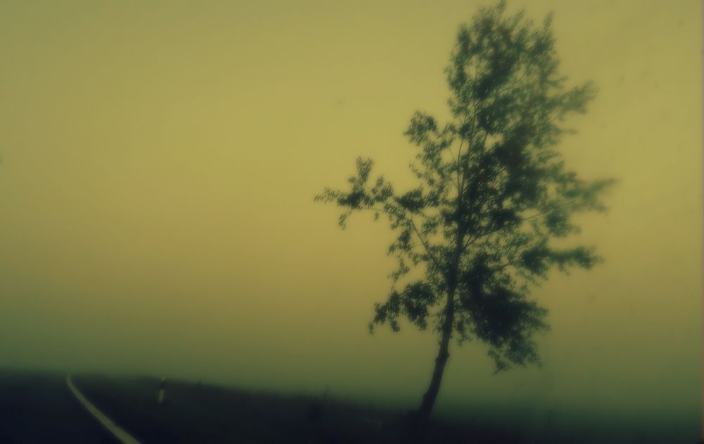 Photo in Abstract #tree #path #sky