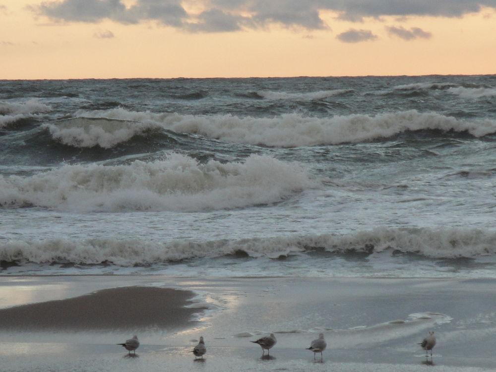 Photo in Sea and Sand #sand #sky #sea #birds