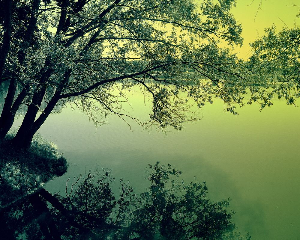 Photo in Nature #trees #lake