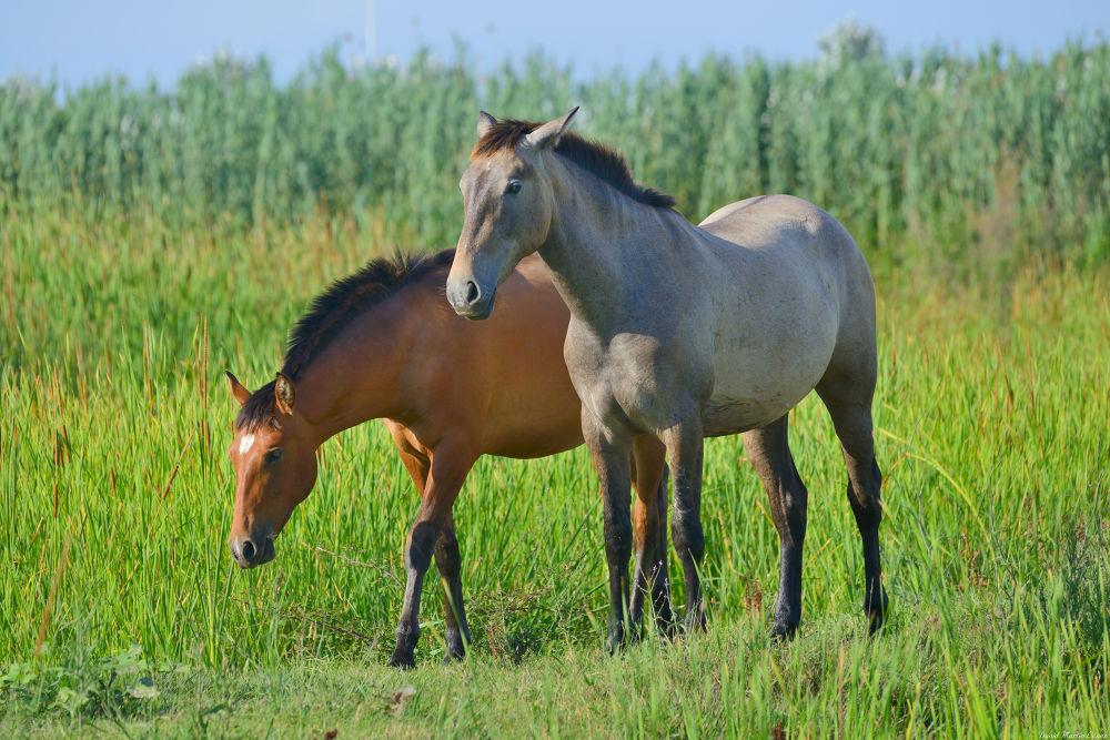 Photo in Animal #animal #brown #caballo #delta del llobregat #grass #hierba #green #grey #gris #horse #marrón #naturaleza #nature #verde