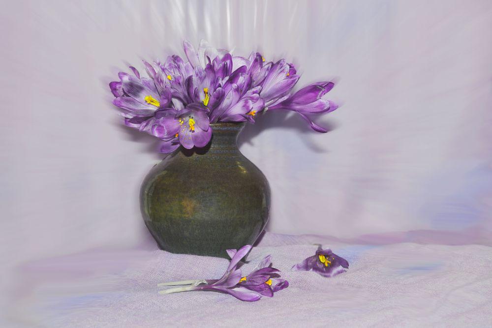 Photo in Still Life #spring #stiil life #fortunately  hope