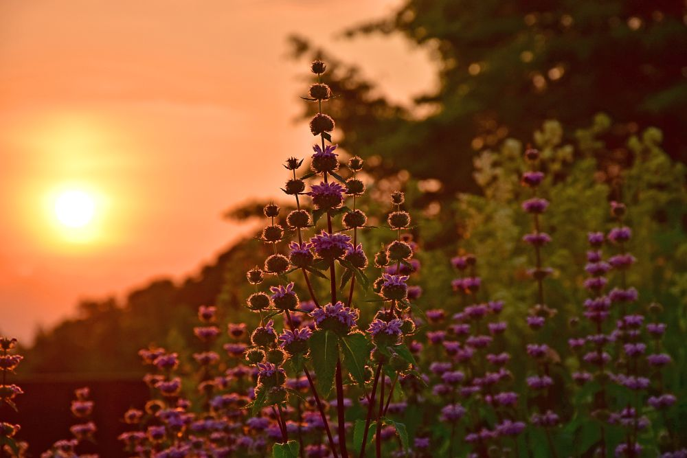 Photo in Nature #plants #flowers #sunrise #purple #garden #park #nature #mood #silence