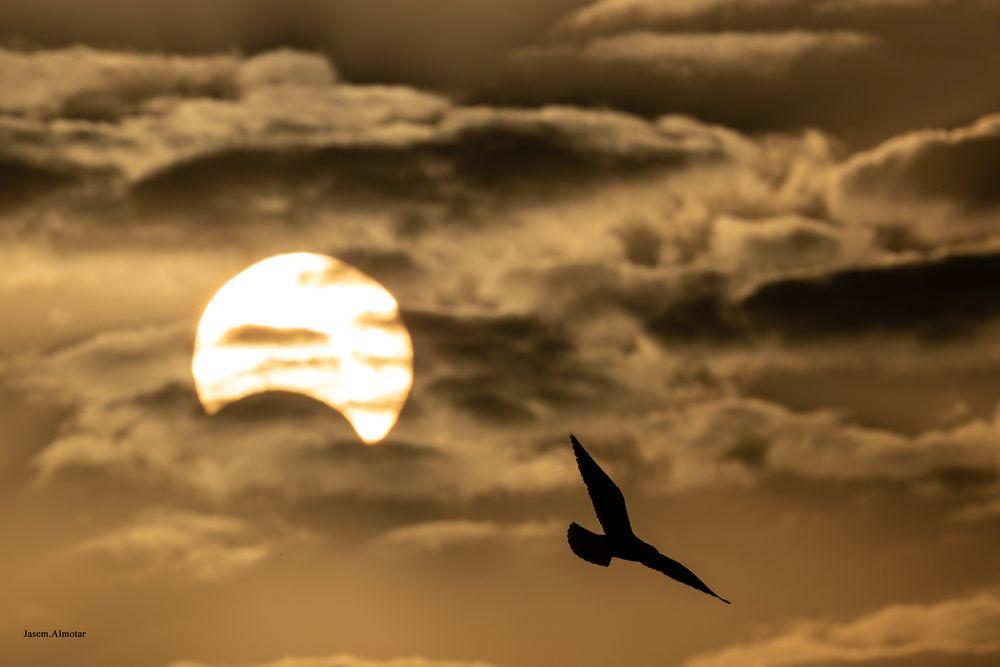 Photo in Nature #animals #birds #bird #eclipse #outdoor #animal #canon #1dx