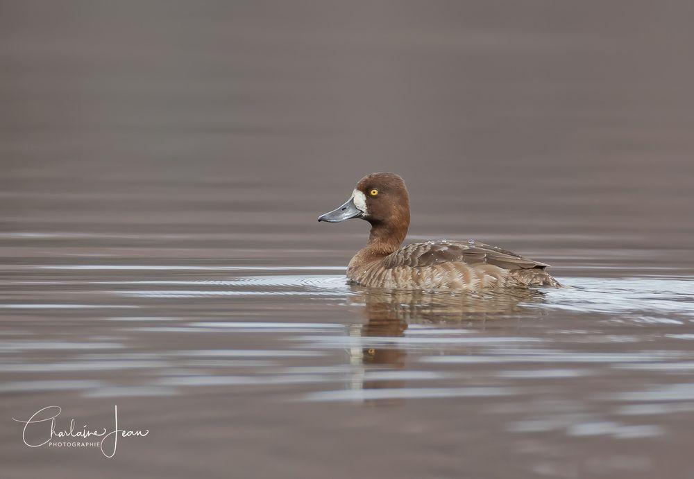 Photo in Animal #bird #birdwatching #birdwatchers #nature #animal #wild #wildlife #lame #water bird