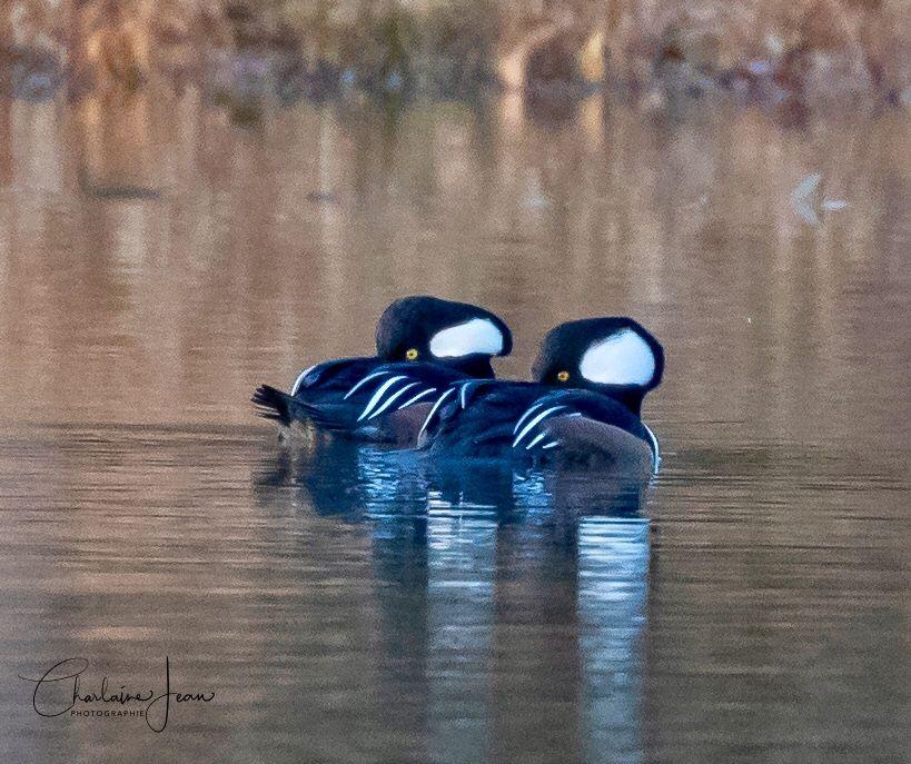 Photo in Animal #bird #birds #birdwatching #birdwatchers #birdwater #animal #nature #wild #wildlife