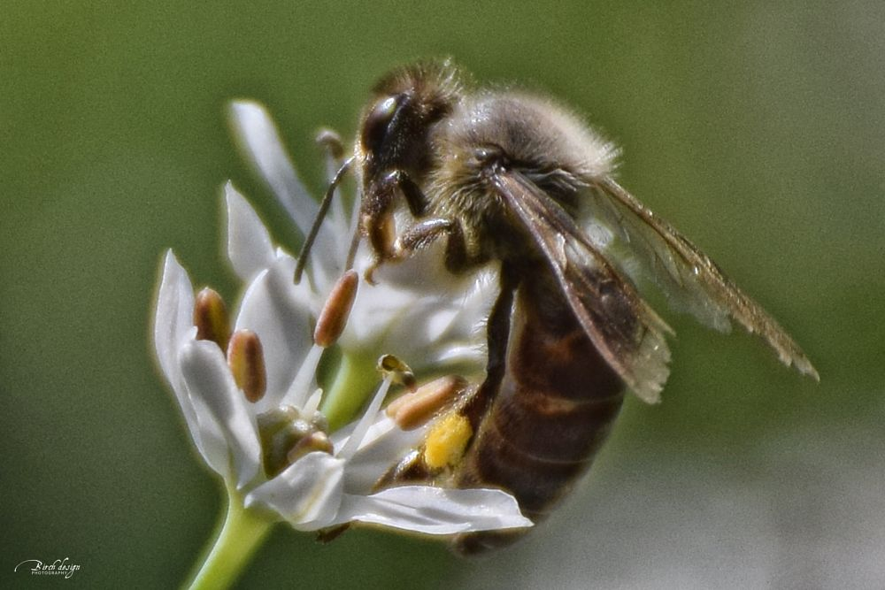 Photo in Animal #bee #flower #work #garden #insect #animal