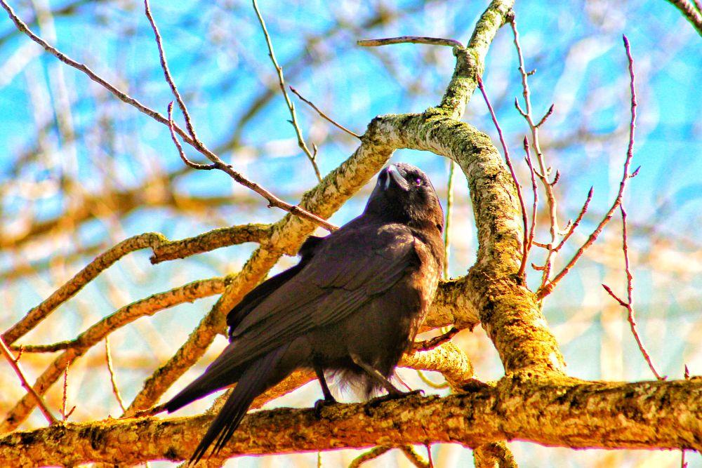 Photo in Random #crowbirdwarmthsentient