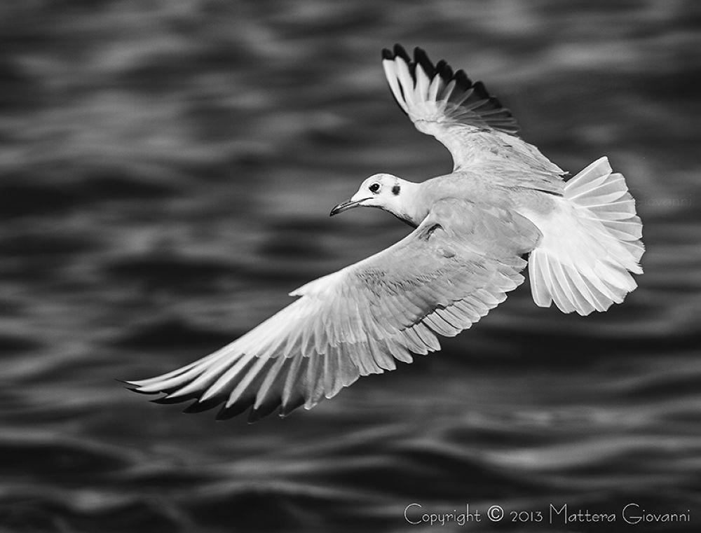 Photo in Nature #gull #ischia #itlay #gabbiano