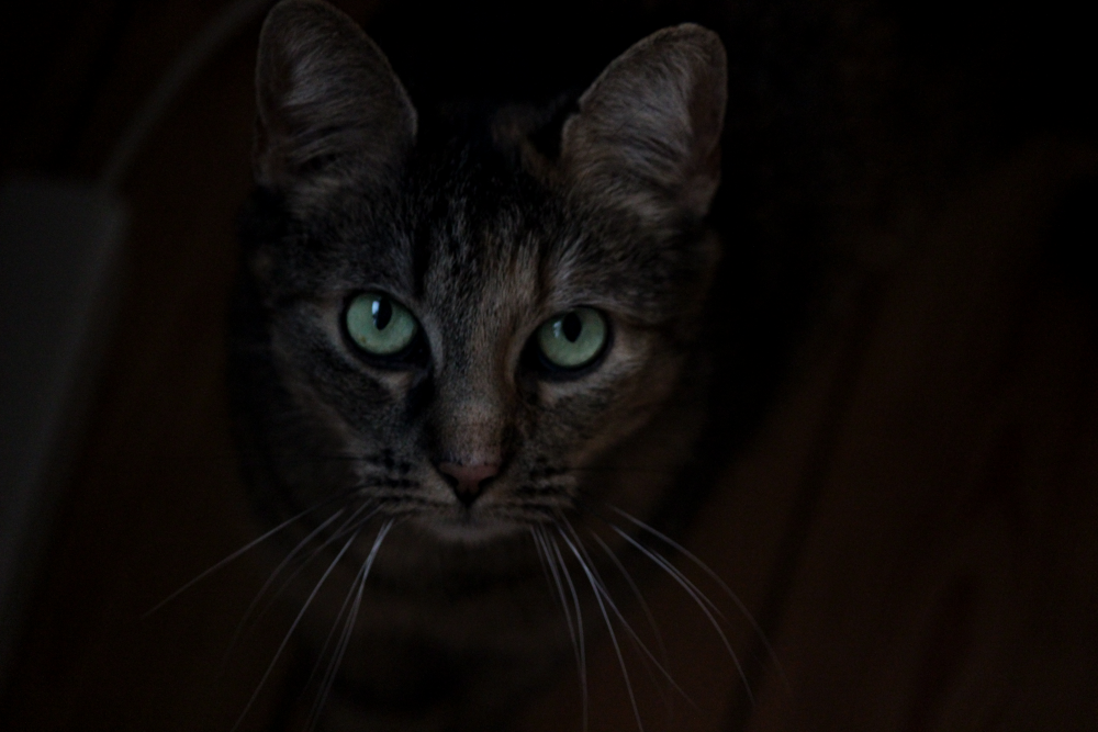 Photo in Random #cold #love #beautiful #photography #winter #photo #snow #light #dark #sweet #picture #cat #cats #eye #amazing #lovely #eyes #wonderful #denmark #photos #pictures #mysterius