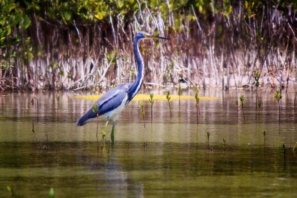 Photo in Animal #animal #bird #geese #crane #birds #wildlife #animals #cranes #heron #wetlands #pelicans #herons #wetlands wildlife #blue herons #pelica