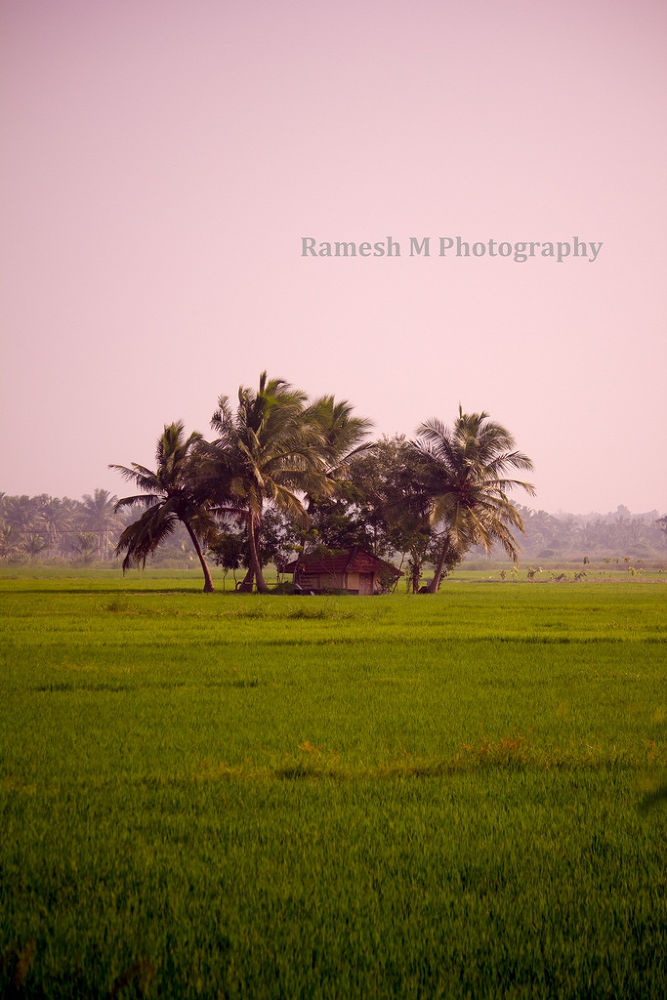 Photo in Landscape #nature #landscape #tamil nadu #indian photography #pudukkottai #indian nature photography #indian landscape photography