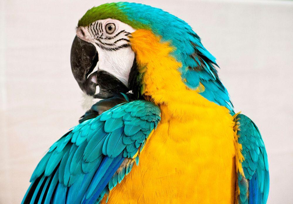 Photo in Random #colour #birds #animals #macau