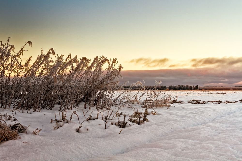 Photo in Landscape #nature #fields #winter #sunset #sky #clouds #finland #coldness #frozen #willowherb #plant #farming
