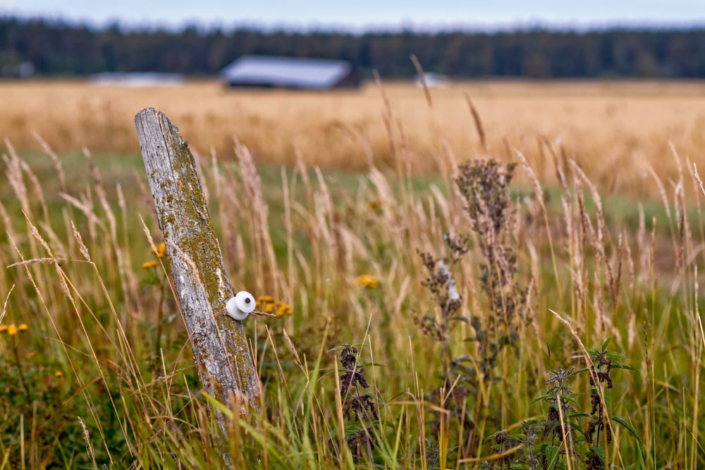 Photo in Landscape #autumn #fields #pole #old #wooden #rustic #agriculture #farming #plant #nature #finland #detail