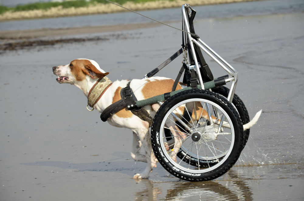 Photo in Animal #animal #dog #handicap