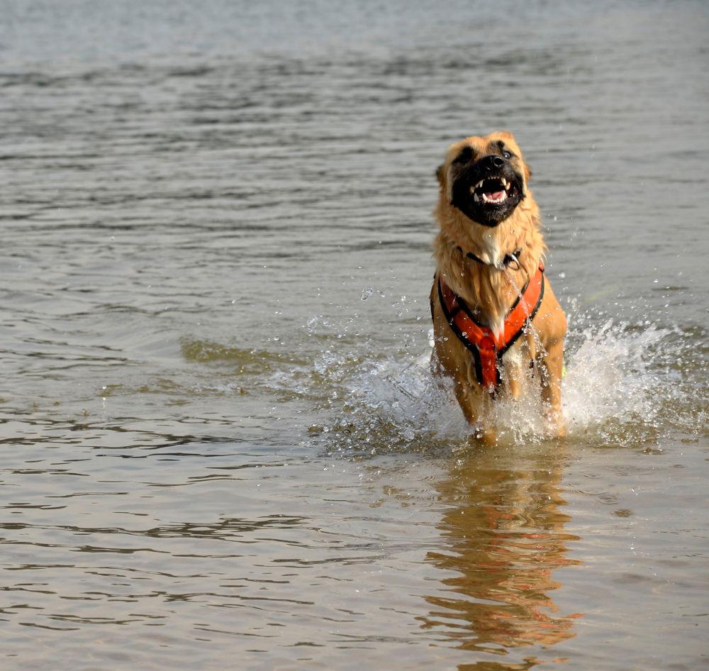 Photo in Animal #animal #dog #water #play
