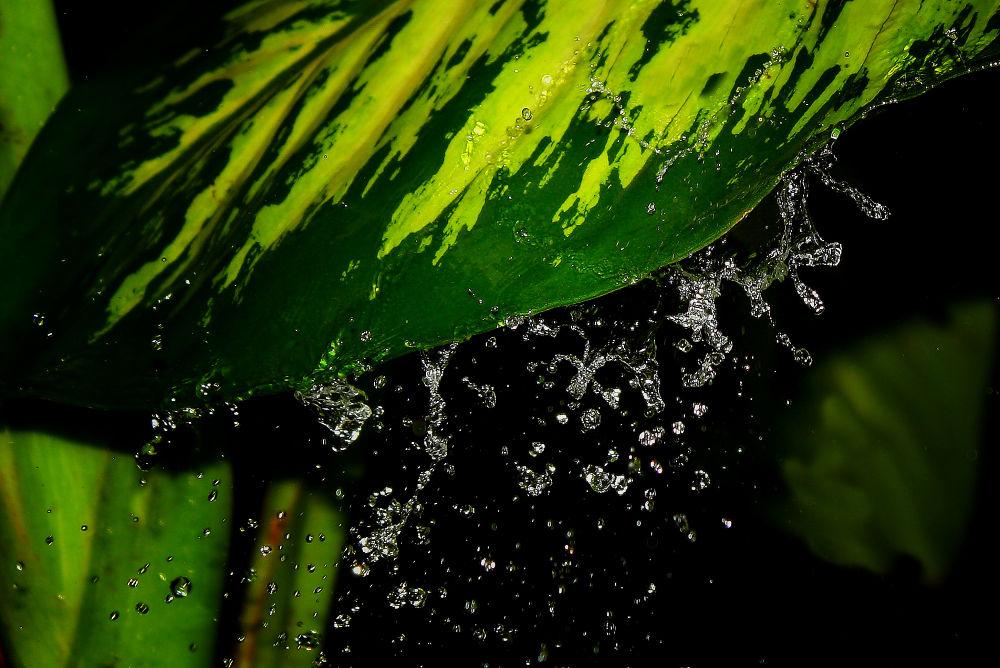 Photo in Random #rain #drops #wet #leaf #drop #leaves #raindrops #raindrop #soaking #soaking wet #dripping leaves #dripping leaf