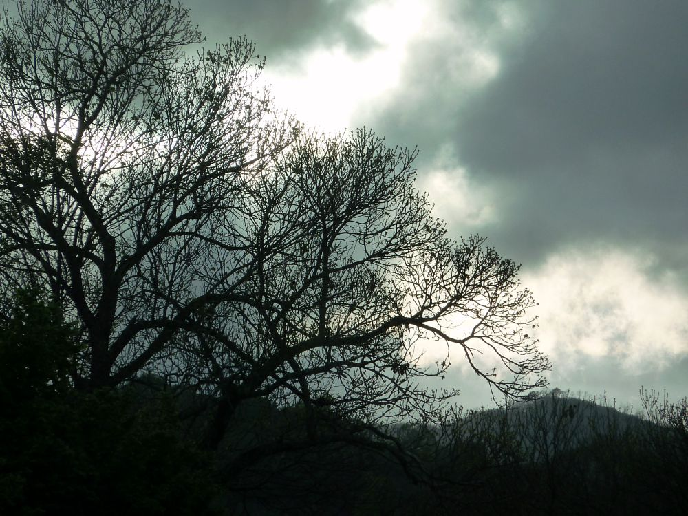 Photo in Random #landscape #early evening #trees #clouds