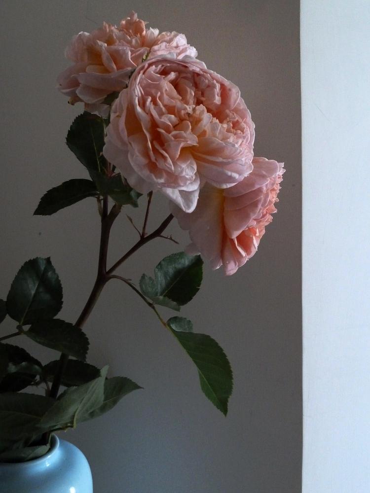 Photo in Random #still life #flowers #roses