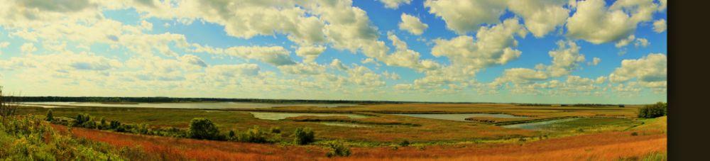 Photo in Random #marsh #water