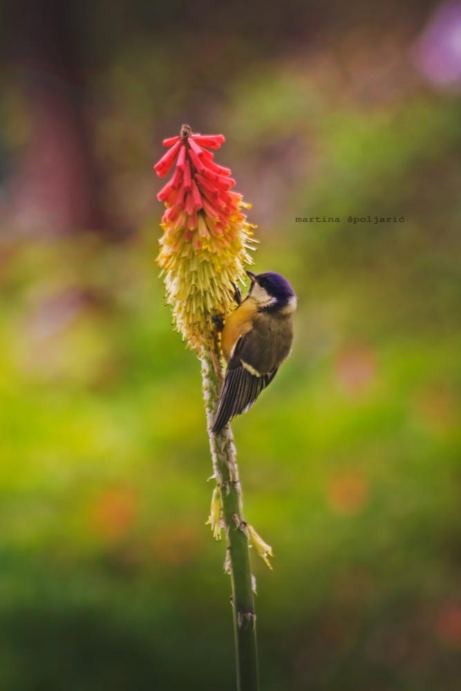 Photo in Animal #tit bird #birdsd #small birds #animal #colors #colorful #sunny #flowers #nature