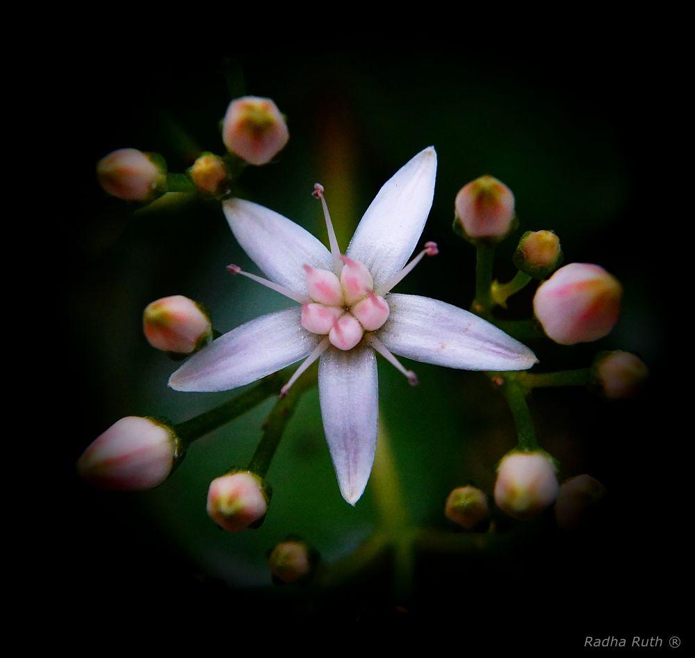 Photo in Random #flowers