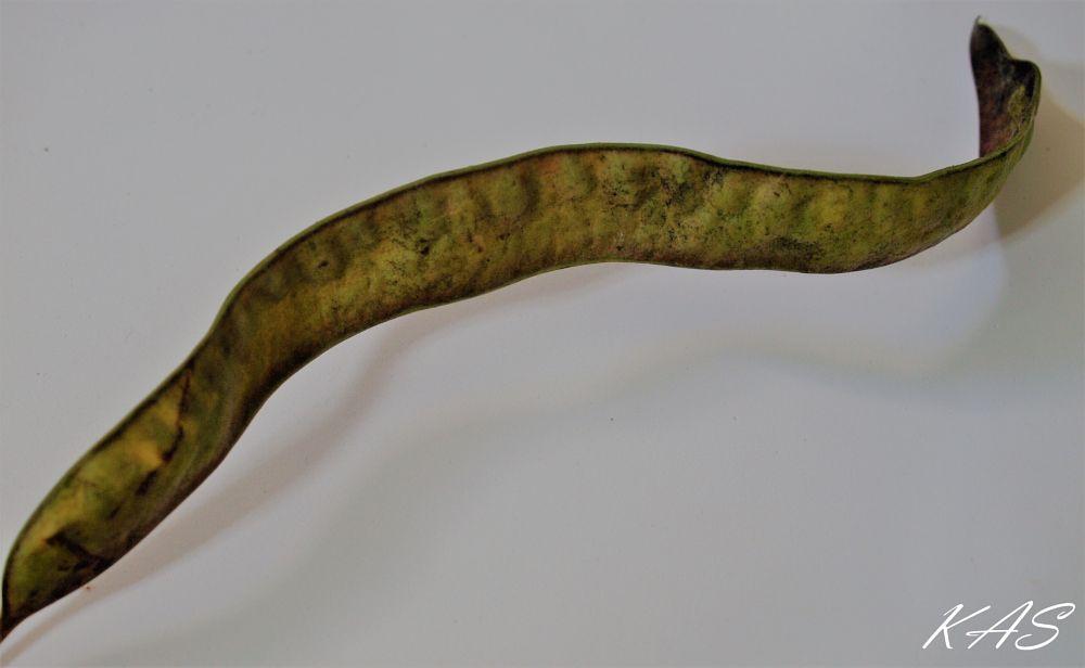 Photo in Random #curve #bends #nature #macro #texture