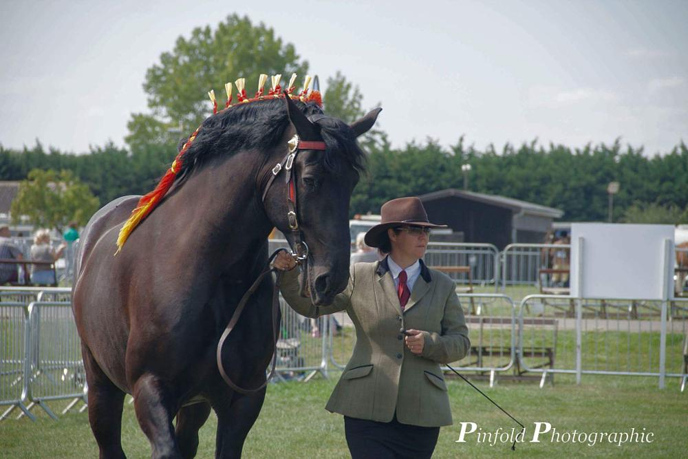 Photo in Animal #horses #competitions #agricultural