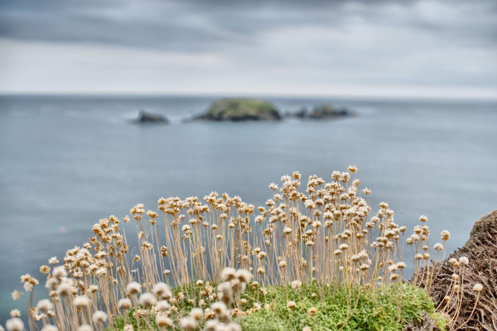 Photo in Landscape #kilfarrasy #rocks #cliffs #gate #stack