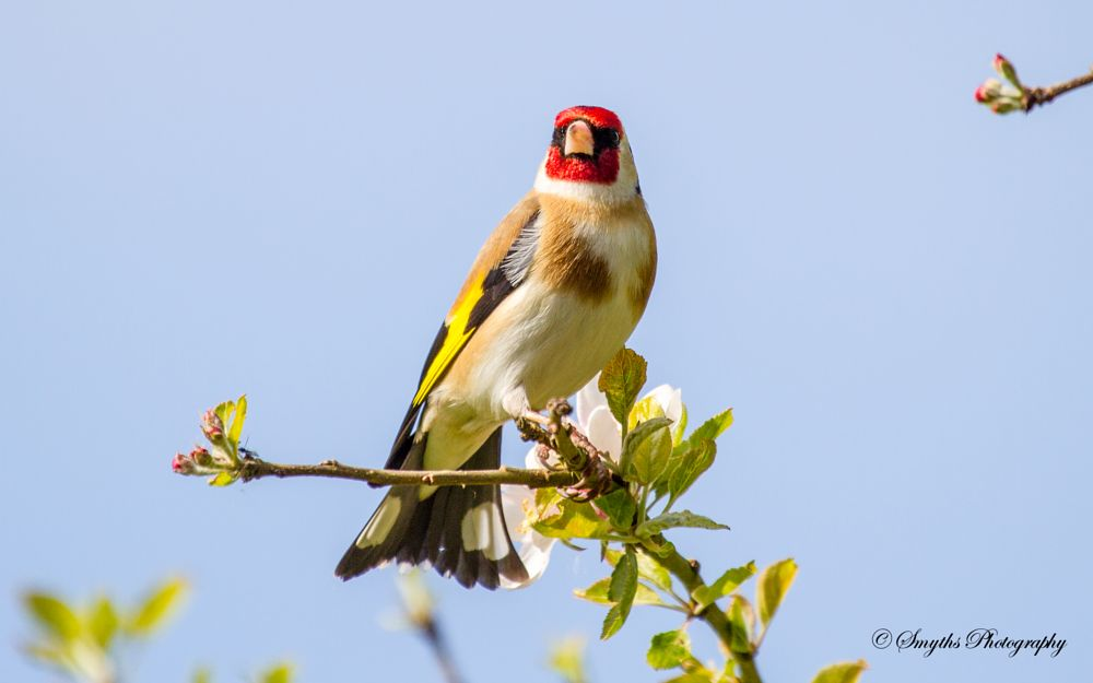 Photo in Animal #birds #goldfinch #wildlife #nature