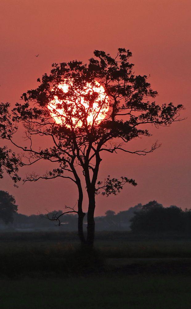 Photo in Landscape #sun #sunny #sunset #zon #zonsondergang