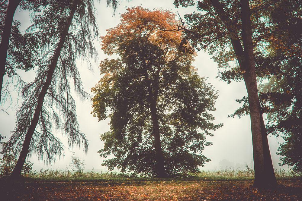 Photo in Random #gradient #tree #random #mist