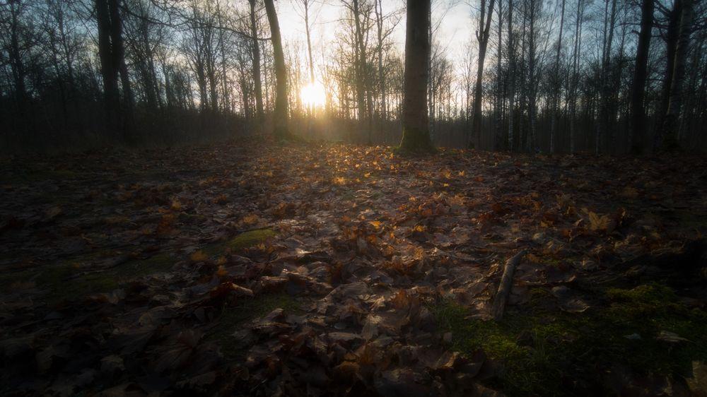 Photo in Landscape #woodland #forest #light #autumn