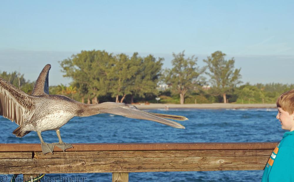 Photo in Random #bird #beach #sand #ocean #pier #child #boy #nino #tide #dania #florida