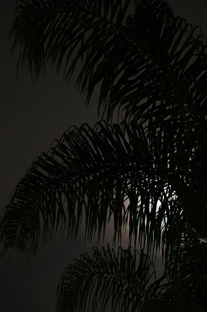 Photo in Random #palm #tree #palm tree #sky #clouds #light #moon #silhouette #slow shutter #long exposure #nikon #photography #new #me #youpic