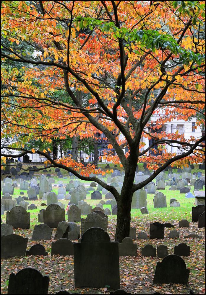 Photo in Landscape #headstone #graveyard #boston