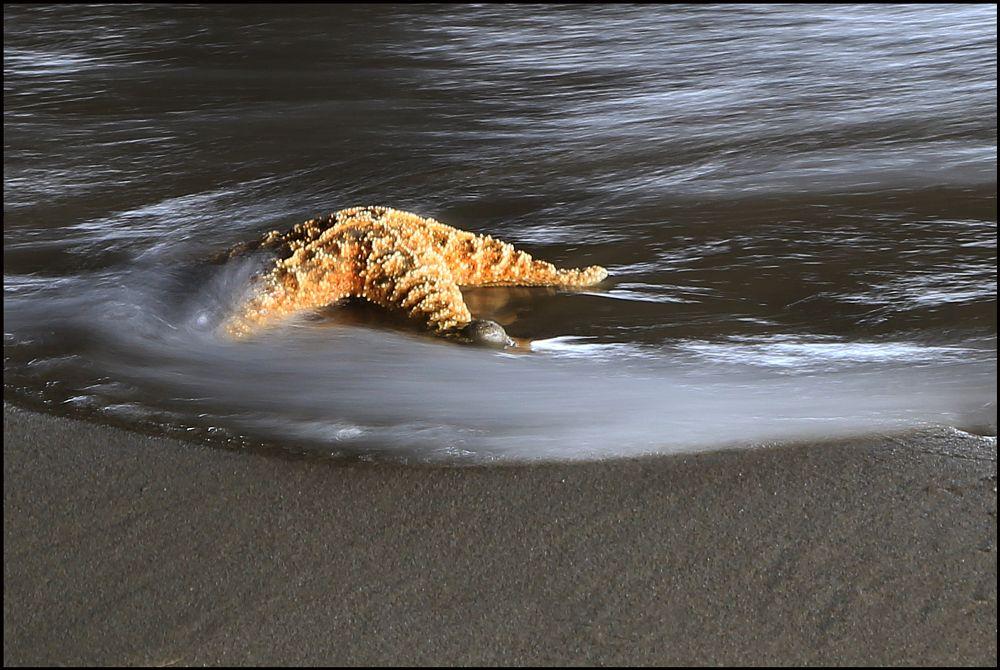 Photo in Nature #starfish #ocean #water