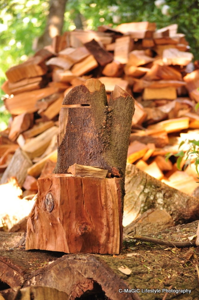 Photo in Random #chair #trees #wood #cape town #wood stack