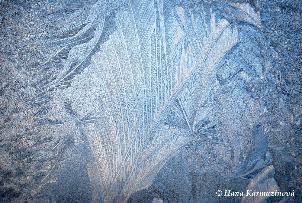 Photo in Random #winter #frost #freeze