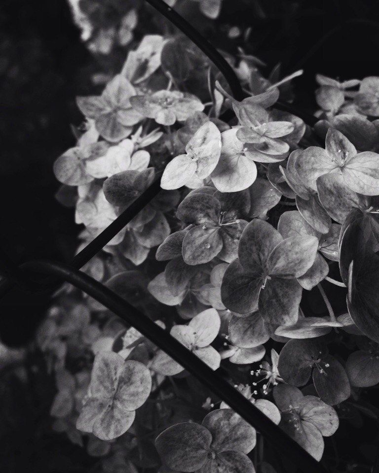 Photo in Black and White #black #white #moscow #composition #macro #like #love #photo #minimalism