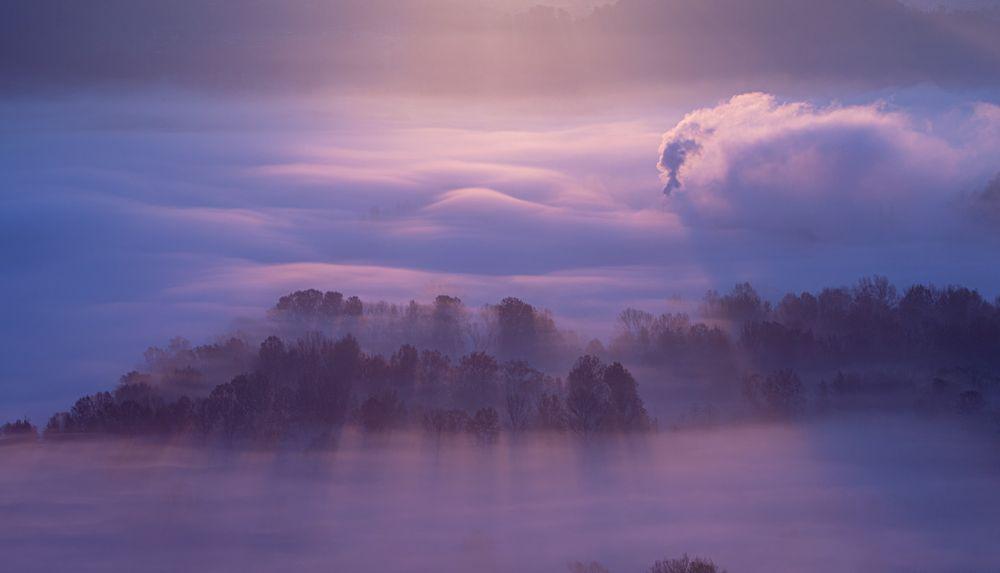 Photo in Landscape #mist #misty #tree #trees #fog #foggy