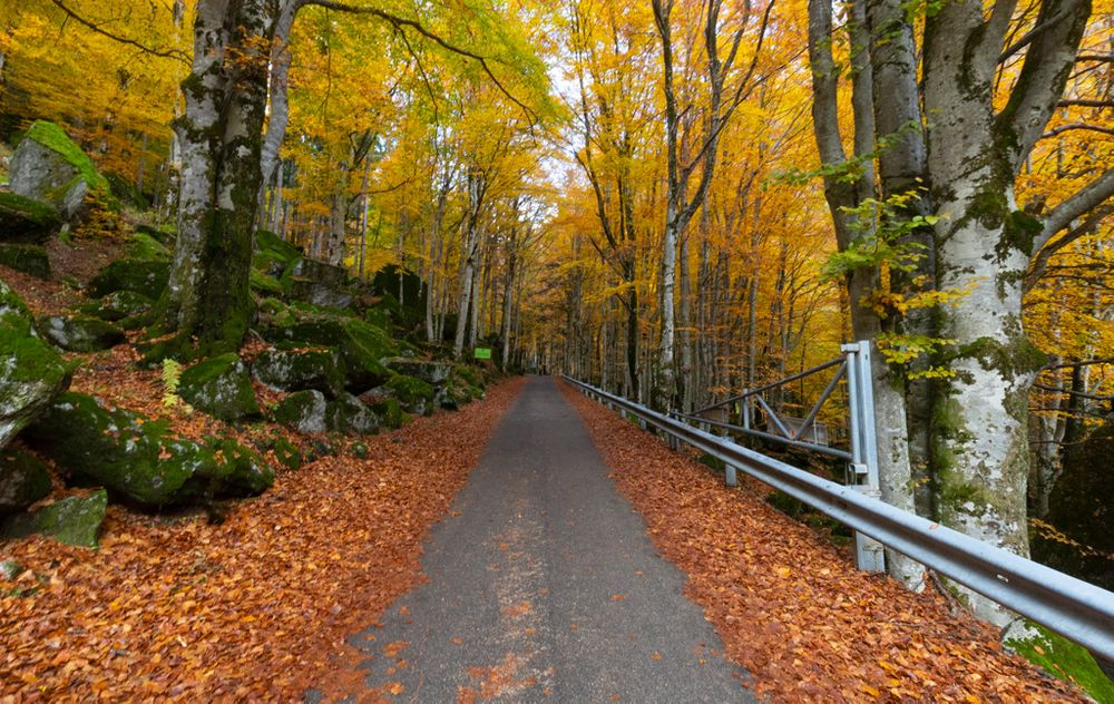 Photo in Landscape #autumn #forest #woods #fall #foliage #tree #trees #path