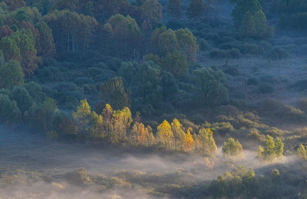 Photo in Landscape #trees #tree #morning #sunrays #mist