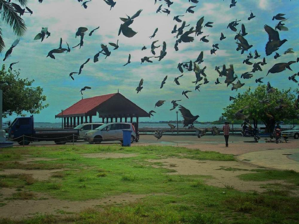 Photo in Animal #pigeons