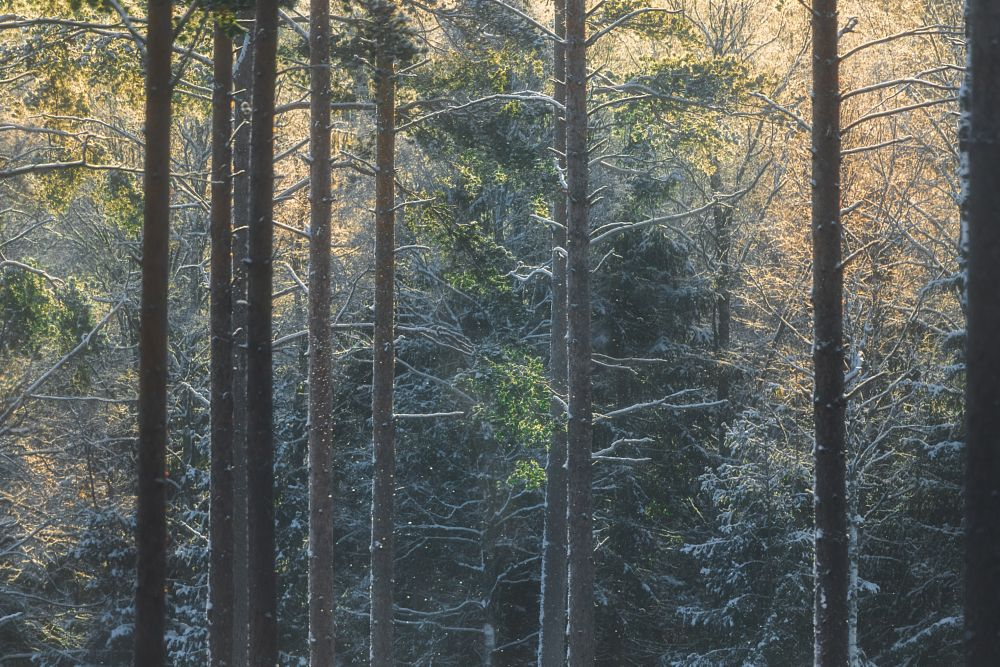 Photo in Nature #forest #winter #snow #sun