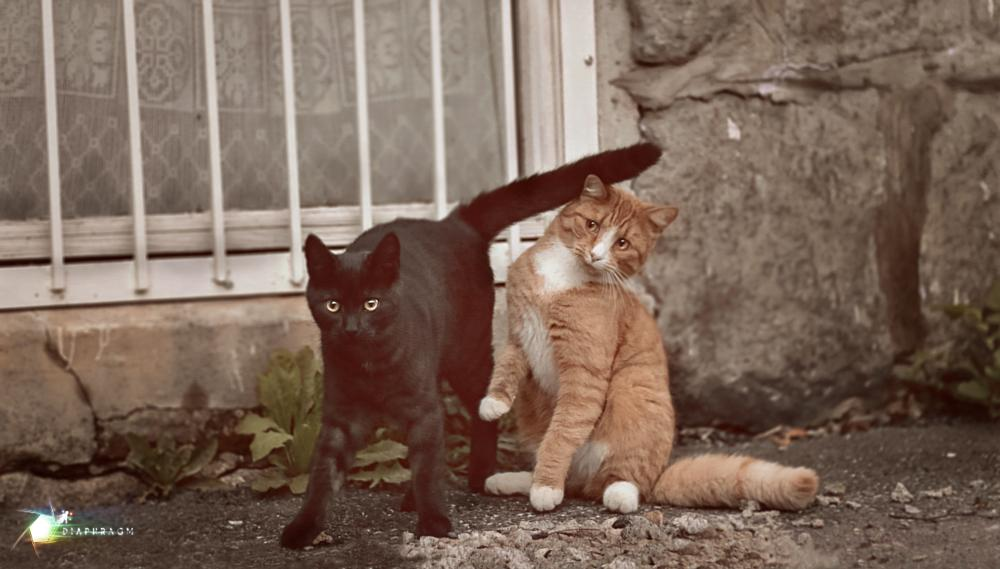 Photo in Animal #youpic #pic #picture #cat #kitty #funny #cute #pose #posing #animals #photography #street photography #street #nature #brothers #friends #forever #norway