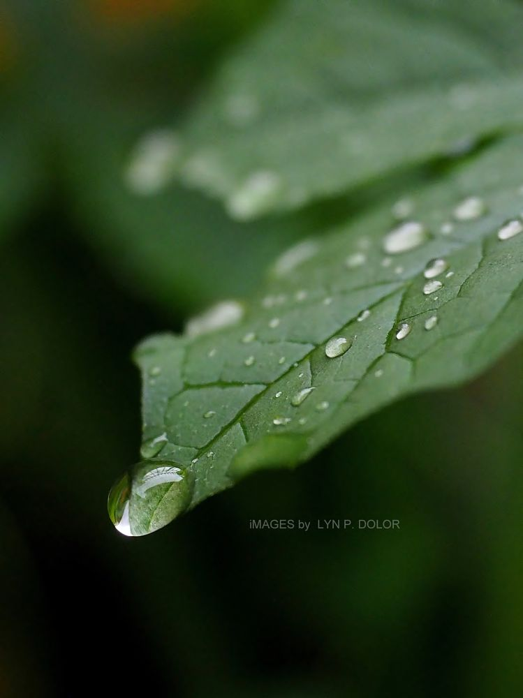 Photo in Nature #leaf #leaves #nature #green