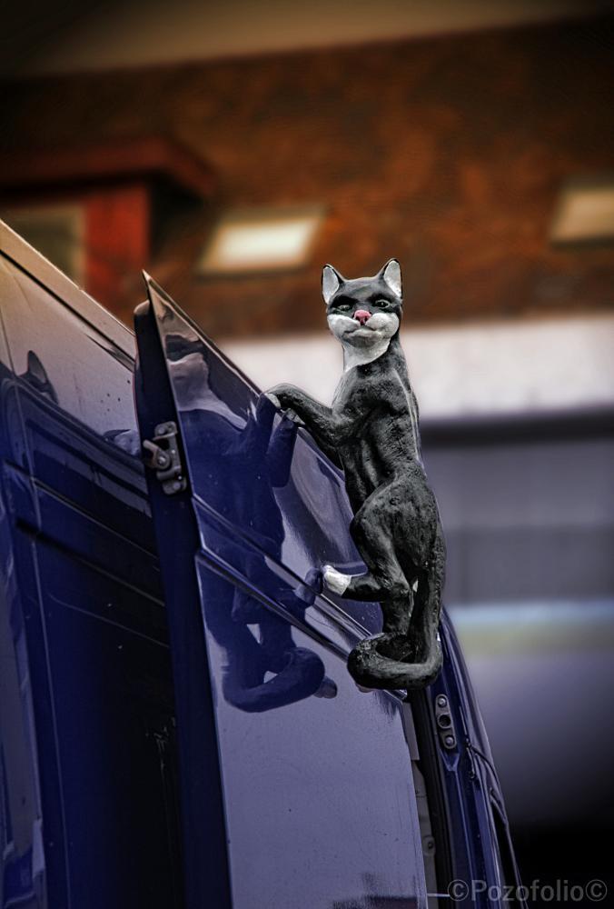 Photo in Fine Art #cat #statue #market