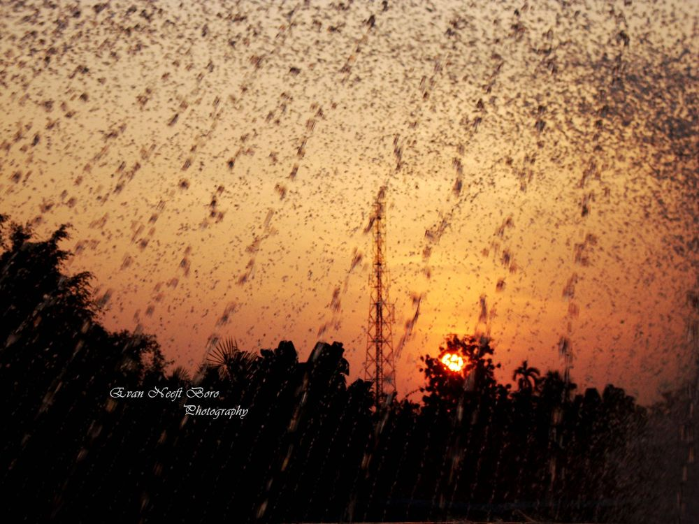 Photo in Nature #sunset #rain #red #water #nature #evening #sun